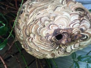 スズメバチの出入り穴