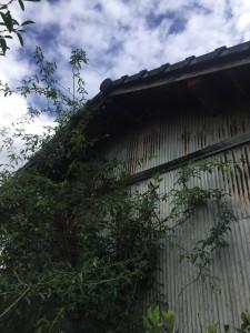 スズメバチの巣撤去後