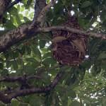 蜂の巣駆除3
