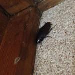 台所のゴキブリ駆除3