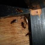 隙間のゴキブリ駆除